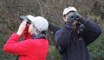 birdcountbirders